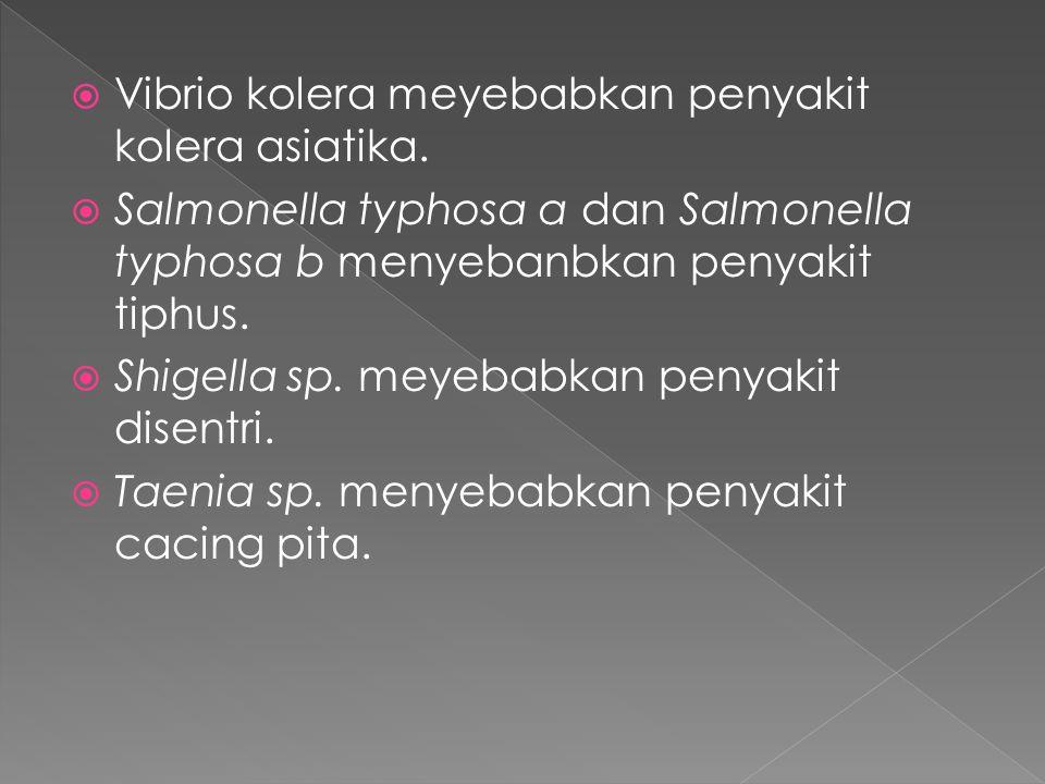  Vibrio kolera meyebabkan penyakit kolera asiatika.