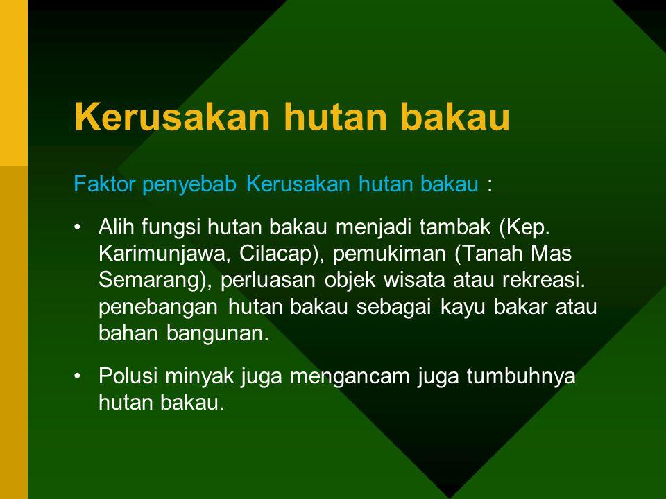 Kerusakan hutan bakau Faktor penyebab Kerusakan hutan bakau : •Alih fungsi hutan bakau menjadi tambak (Kep. Karimunjawa, Cilacap), pemukiman (Tanah Ma