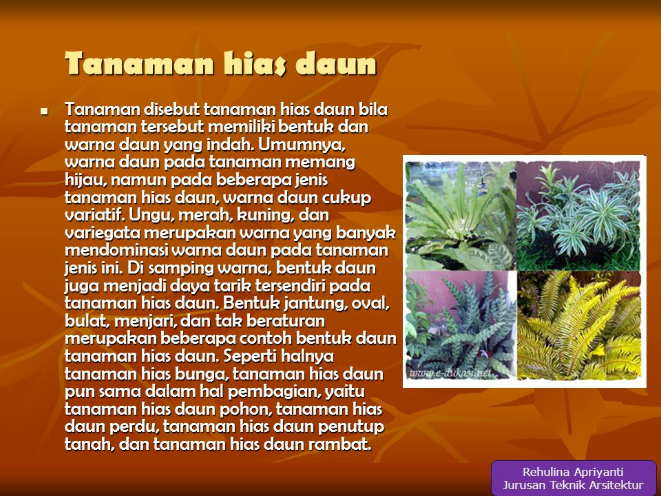 Tanaman hias daun  Tanaman disebut tanaman hias daun bila tanaman tersebut memiliki bentuk dan warna daun yang indah.