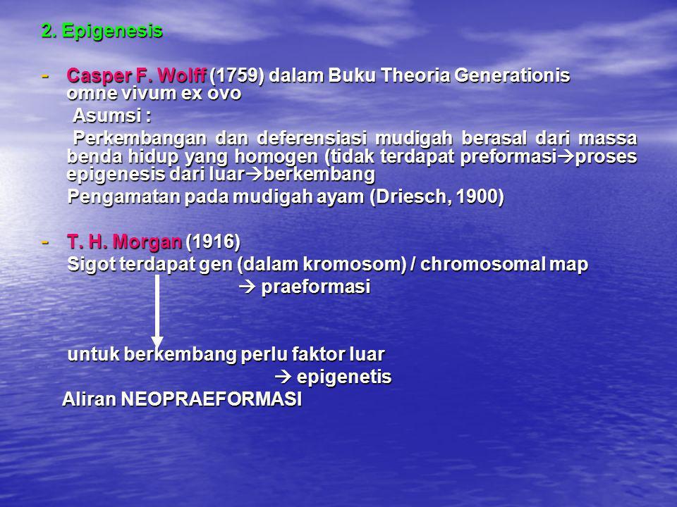 2. Epigenesis - Casper F. Wolff (1759) dalam Buku Theoria Generationis omne vivum ex ovo Asumsi : Asumsi : Perkembangan dan deferensiasi mudigah beras