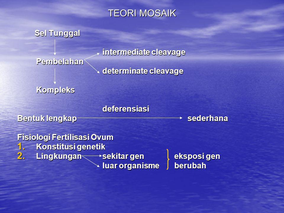 TEORI MOSAIK Sel Tunggal Sel Tunggal intermediate cleavage Pembelahan determinate cleavage Kompleksdeferensiasi Bentuk lengkapsederhana Fisiologi Fert