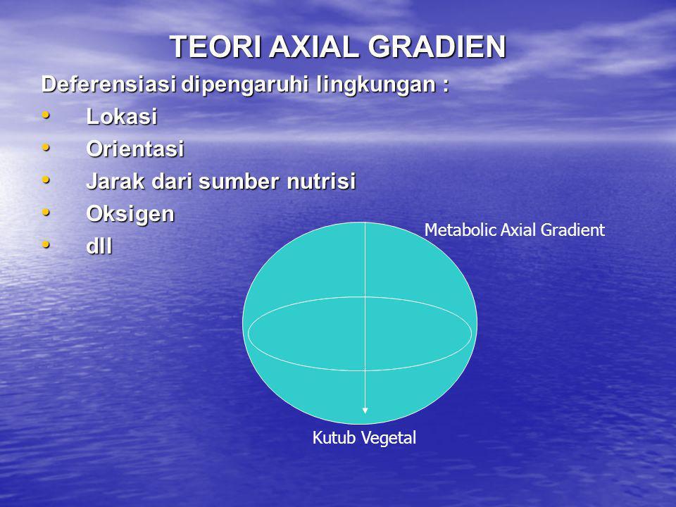 TEORI AXIAL GRADIEN Deferensiasi dipengaruhi lingkungan : • Lokasi • Orientasi • Jarak dari sumber nutrisi • Oksigen • dll Kutub Vegetal Metabolic Axi