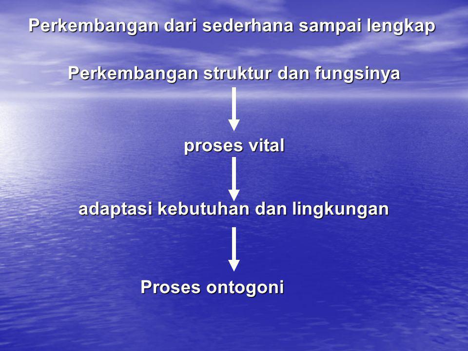 Perkembangan dari sederhana sampai lengkap Perkembangan struktur dan fungsinya proses vital adaptasi kebutuhan dan lingkungan Proses ontogoni