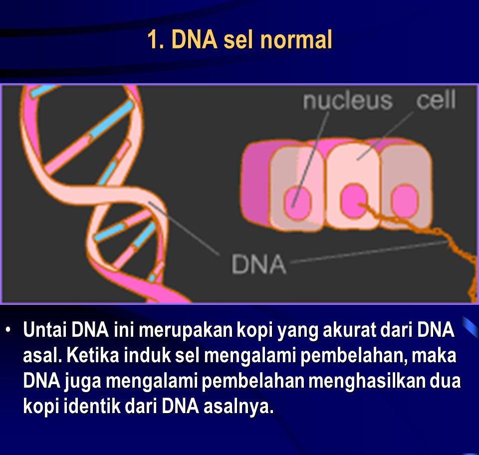 1. DNA sel normal • Untai DNA ini merupakan kopi yang akurat dari DNA asal. Ketika induk sel mengalami pembelahan, maka DNA juga mengalami pembelahan