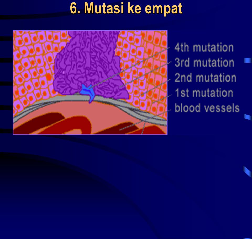 6. Mutasi ke empat • The new type of cells grow rapidly, allowing for more opportunities for mutations. The next mutation paves the way for the develo
