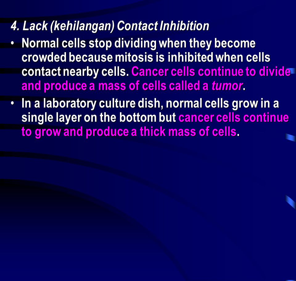 4. Lack (kehilangan) Contact Inhibition • Normal cells stop dividing when they become crowded because mitosis is inhibited when cells contact nearby c