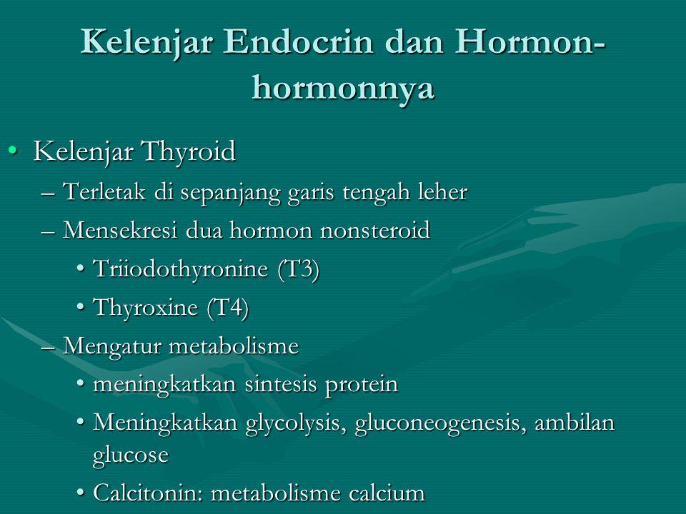 Kelenjar Endocrin dan Hormon- hormonnya •Kelenjar Pituitary •Latihan tampaknya menjadi stimulan kuat terhadap hypothalamus untuk mengeluarkan hormon-h