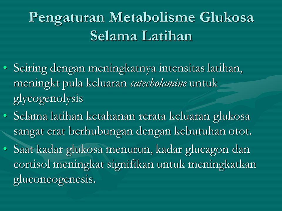 Pengaturan Metabolisme Glukosa Selama Latihan •Sekresi Glucagon meningkat selama latihan untuk meningkatkan pemecahan glycogen dalam liver (glycogenol