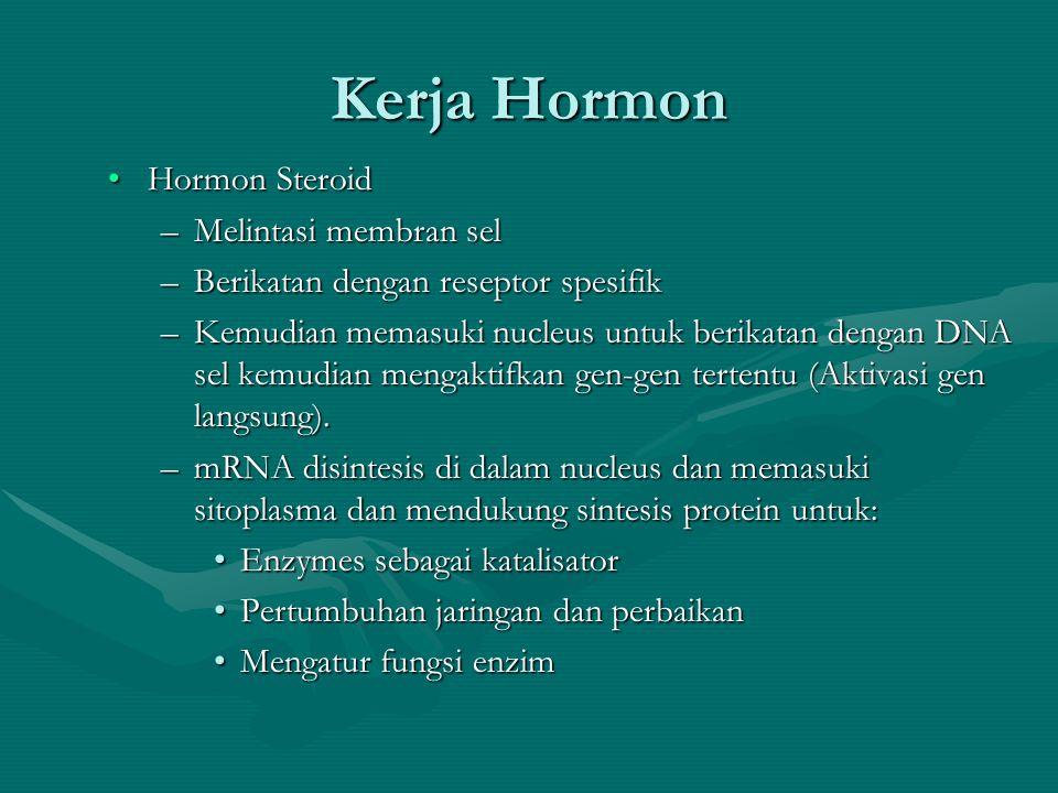 Kerja Hormon •Hormon Steroid –Melintasi membran sel –Berikatan dengan reseptor spesifik –Kemudian memasuki nucleus untuk berikatan dengan DNA sel kemudian mengaktifkan gen-gen tertentu (Aktivasi gen langsung).