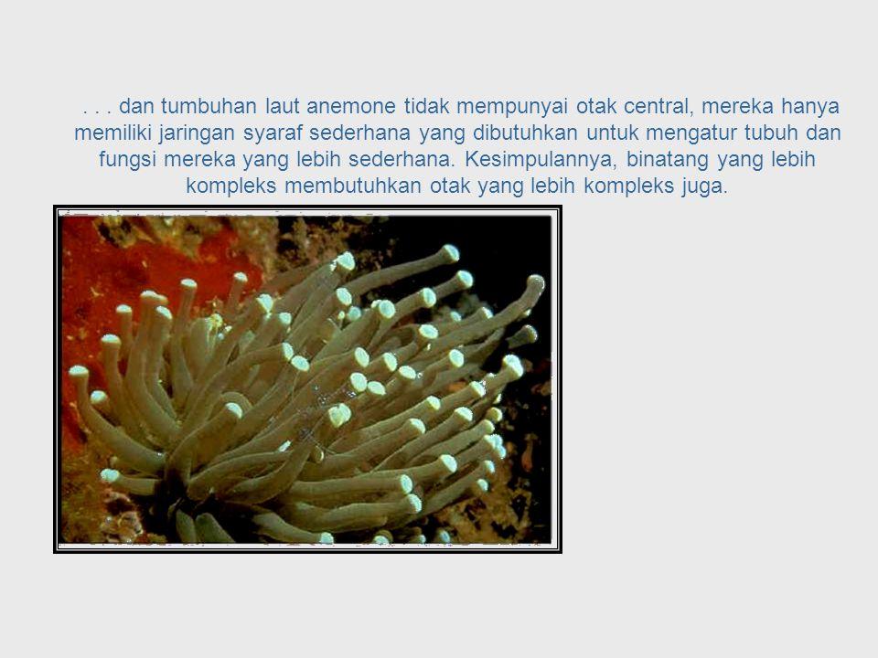 ... lintah laut,... Sea Cucumber System
