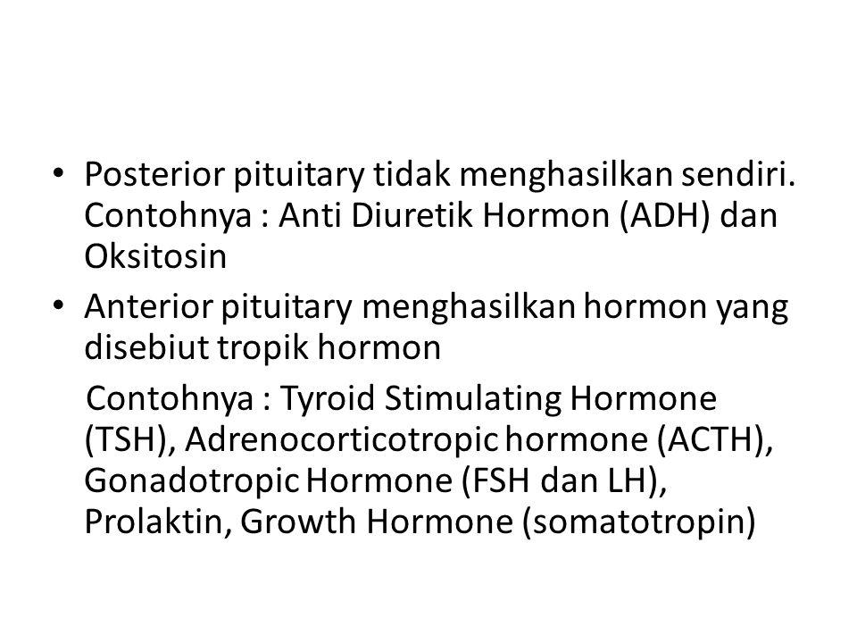 • Posterior pituitary tidak menghasilkan sendiri.