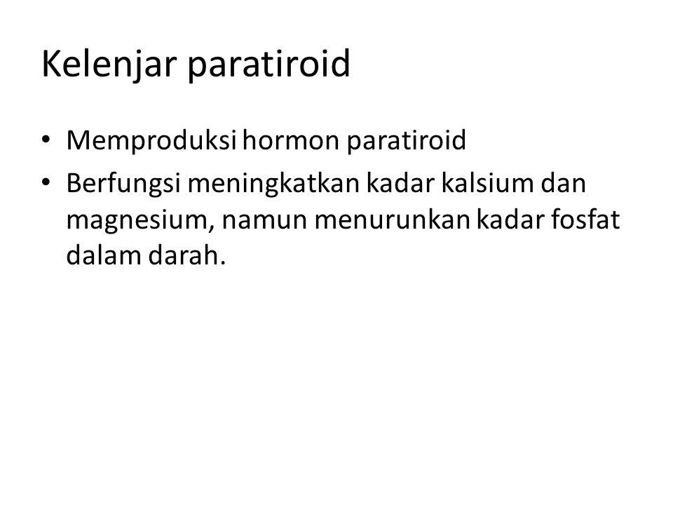 Kelenjar paratiroid • Memproduksi hormon paratiroid • Berfungsi meningkatkan kadar kalsium dan magnesium, namun menurunkan kadar fosfat dalam darah.