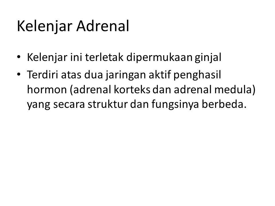 Kelenjar Adrenal • Kelenjar ini terletak dipermukaan ginjal • Terdiri atas dua jaringan aktif penghasil hormon (adrenal korteks dan adrenal medula) yang secara struktur dan fungsinya berbeda.