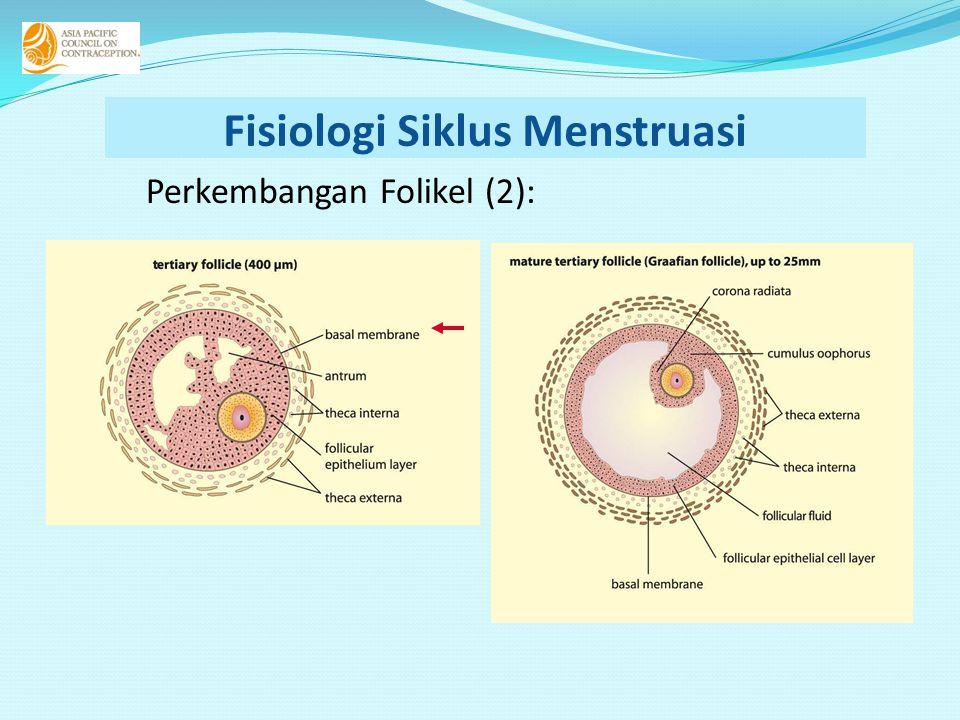 Fisiologi Siklus Menstruasi Perkembangan Folikel (2):