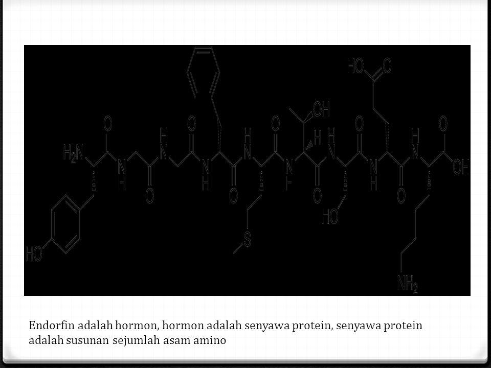 Endorfin adalah hormon, hormon adalah senyawa protein, senyawa protein adalah susunan sejumlah asam amino