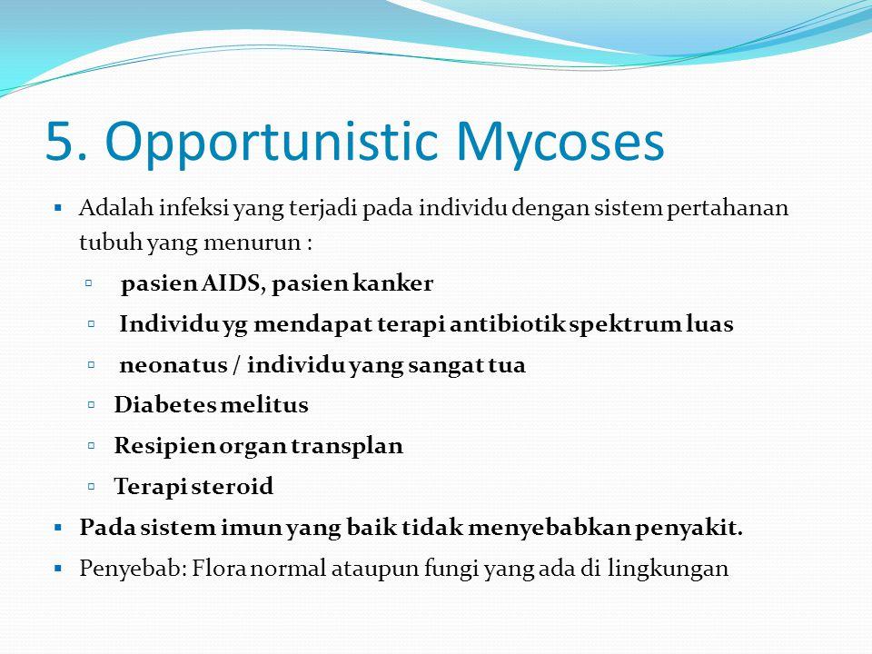 5. Opportunistic Mycoses  Adalah infeksi yang terjadi pada individu dengan sistem pertahanan tubuh yang menurun :  pasien AIDS, pasien kanker  Indi