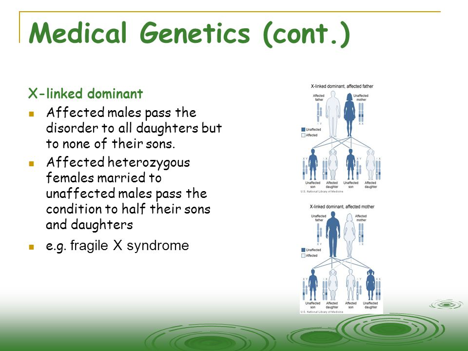 Medical Genetics (cont.) X-linked dominant  Affected males pass the disorder to all daughters but to none of their sons.