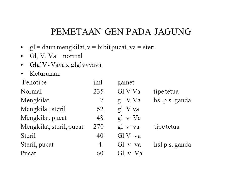 PEMETAAN GEN PADA JAGUNG •gl = daun mengkilat, v = bibit pucat, va = steril •Gl, V, Va = normal •GlglVvVava x glglvvvava •Keturunan: Fenotipejmlgamet