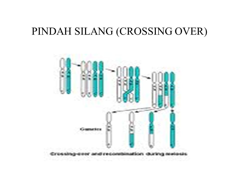 PINDAH SILANG (CROSSING OVER)