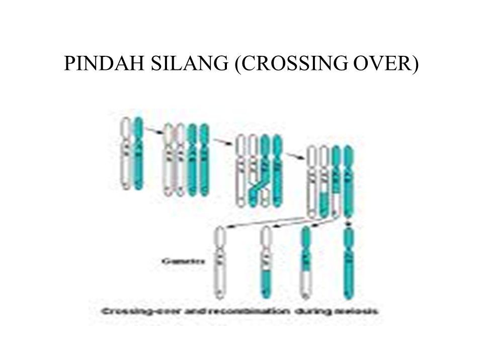 •Terjadi saat kromosom homolog telah berpasangan (sinapsis) dan masing-masing kromosom sudah membelah menjadi 2 kromatid •Pindah silang : pertukaran bagian non sister chromatid dari kromosom homolog.