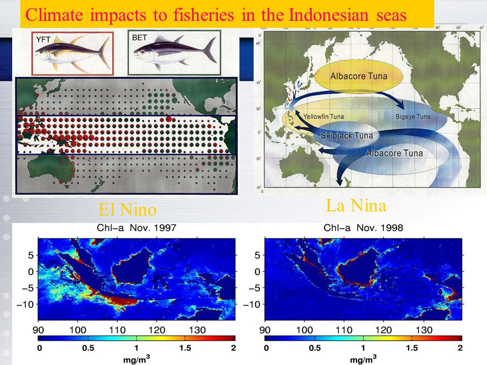 El Nino La Nina Climate impacts to fisheries in the Indonesian seas