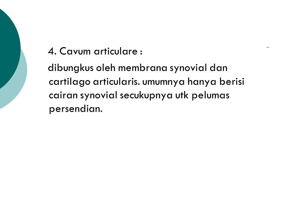 3. Capsula articularis :mrpk bentukan tabung simpel yang ujungnya dilekatkan sekitar facies articularis. tersusun 2 lapisan : - lapisan luar : jaringa