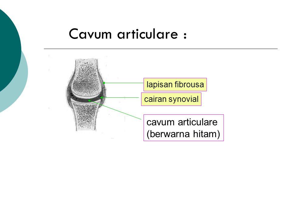 4. Cavum articulare : dibungkus oleh membrana synovial dan cartilago articularis. umumnya hanya berisi cairan synovial secukupnya utk pelumas persendi