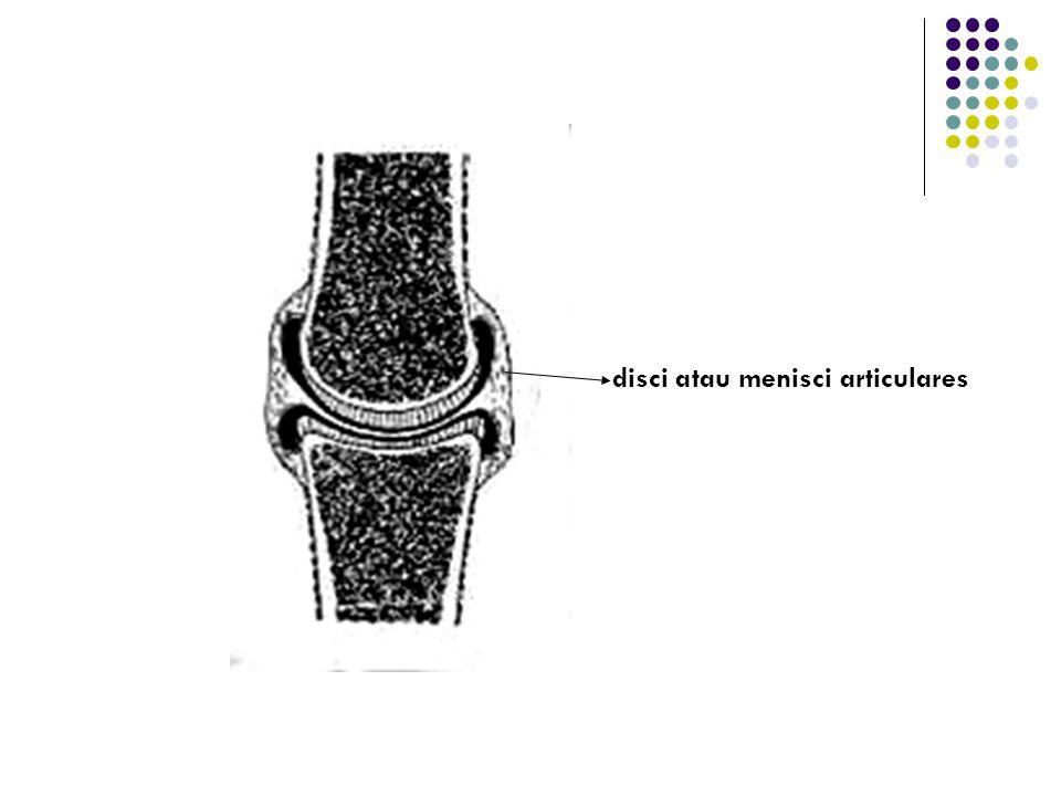6. Disci atau menisci articularis : mrpk plat cartilago fibrousa atau jaringan fibrousa padat yang terletak diantara cartilago articulares, dan membag