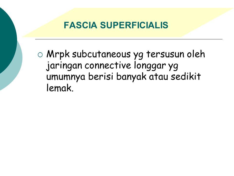 B. fascia : mrpk lembaran jaringan connective, tersusun terutama oleh bbrp bendel serabut putih yang pada bbrp kasus ada banyak atau sedikit bercampur