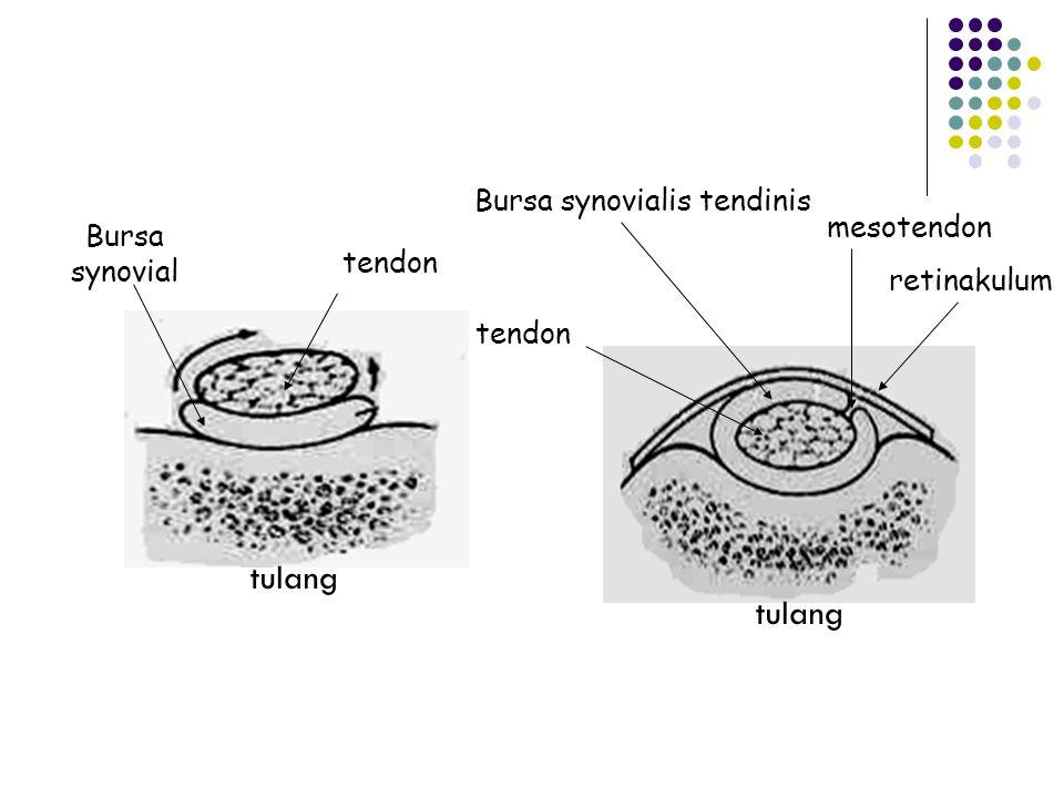  Sulcus dimana tendon berada berubah menjadi canal oleh sebuah pita atau lembaran fascia yg dikenal sbg ligamen vaginal atau annular ( lig. vaginale)