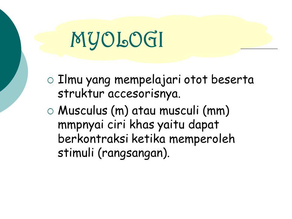 tendon Bursa synovial tendon Bursa synovialis tendinis mesotendon retinakulum tulang