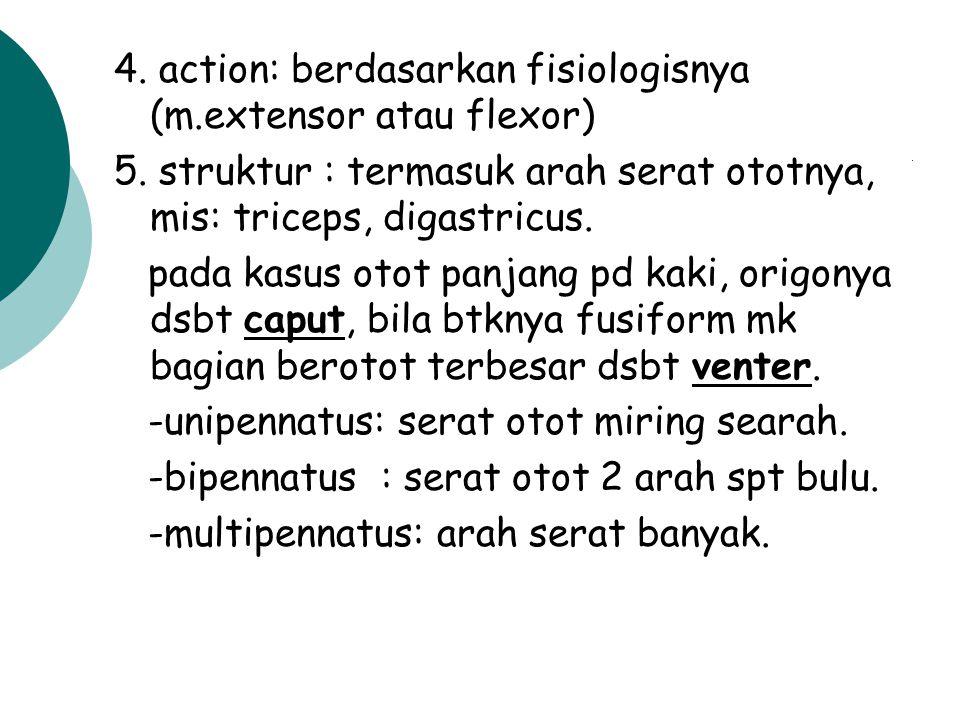 DISKRIPSI OTOT didasarkan atas: 1. nama: berdasarkan bbrp pertimbangan al. action, bentuk, posisi, arah. m. flexor carpi radialis. 2. bentuk: bisa ben