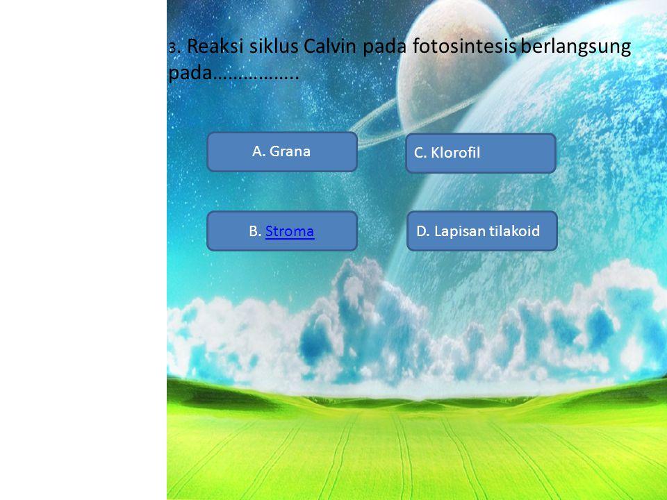 3. Reaksi siklus Calvin pada fotosintesis berlangsung pada…………….. A. Grana B. StromaD. Lapisan tilakoid C. Klorofil