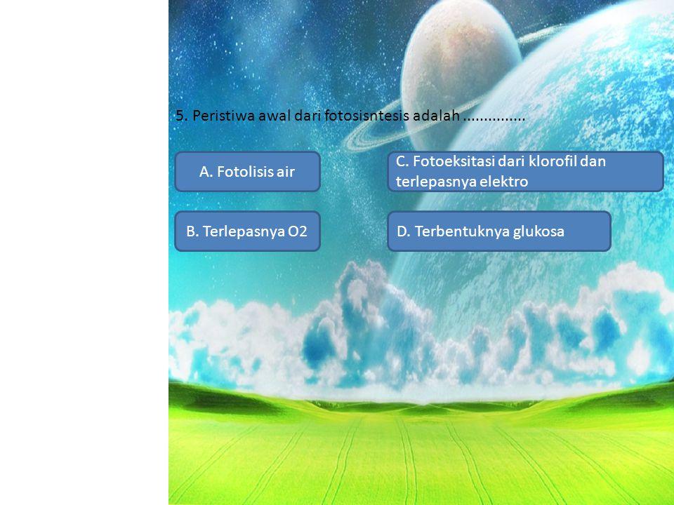 5. Peristiwa awal dari fotosisntesis adalah............... A. Fotolisis air B. Terlepasnya O2D. Terbentuknya glukosa C. Fotoeksitasi dari klorofil dan