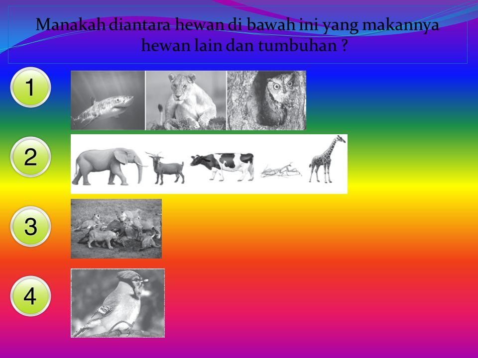 Binatang ini termasuk herbivora karena makanannya.... Rumput, biji-bijian, ikan Daun, rumput,tumbuhan Tumbuhan, daging, ikan Biji-bijian, rumput, dagi