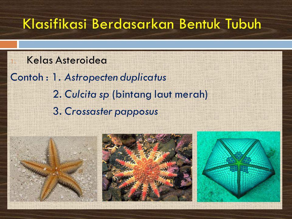 Klasifikasi Berdasarkan Bentuk Tubuh 1.Kelas Asteroidea Contoh : 1.