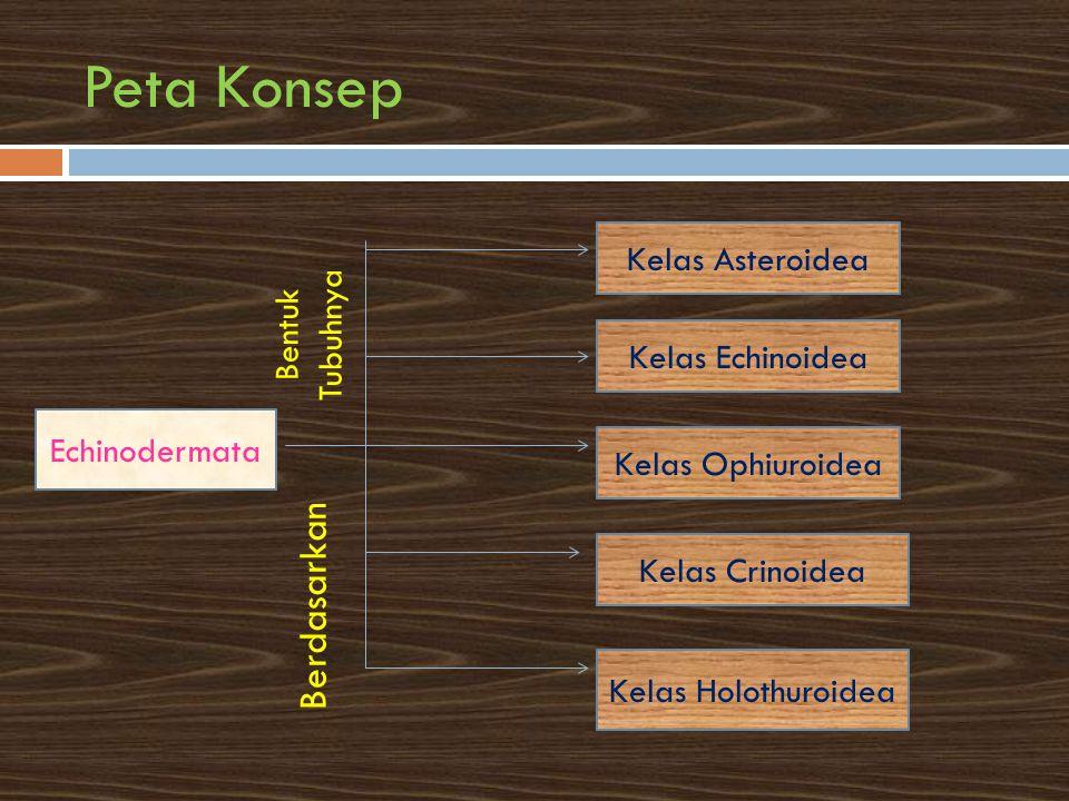 Peta Konsep Echinodermata Kelas Asteroidea Kelas Echinoidea Kelas Ophiuroidea Kelas Crinoidea Kelas Holothuroidea Berdasarkan Bentuk Tubuhnya