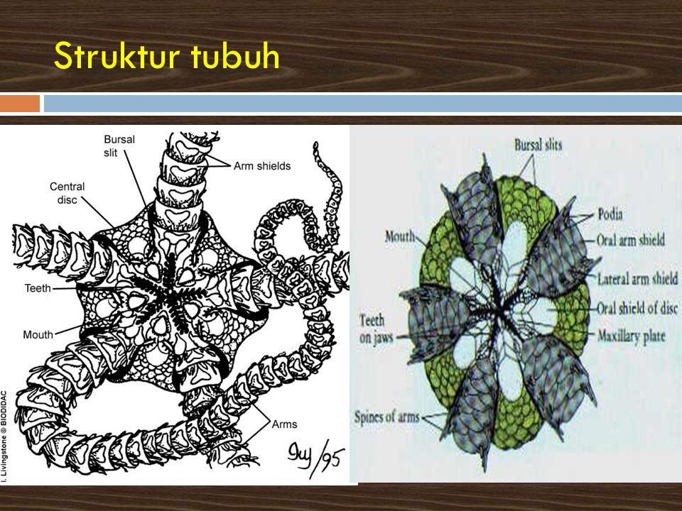 Struktur tubuh