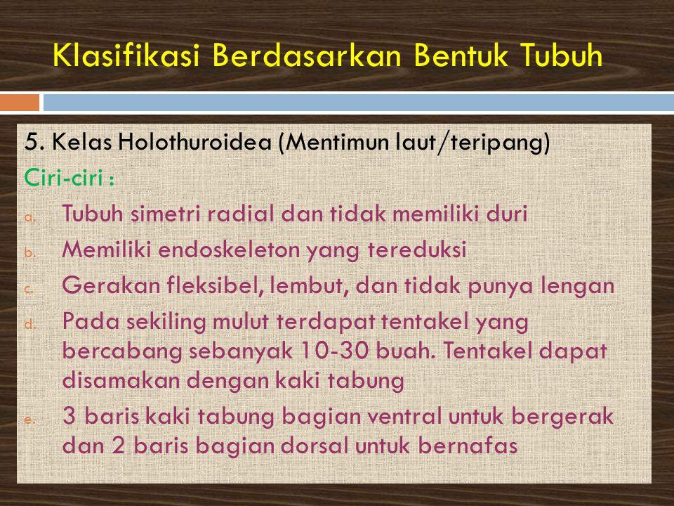Klasifikasi Berdasarkan Bentuk Tubuh 5.Kelas Holothuroidea (Mentimun laut/teripang) Ciri-ciri : a.