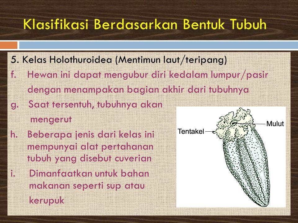 Klasifikasi Berdasarkan Bentuk Tubuh 5.Kelas Holothuroidea (Mentimun laut/teripang) f.