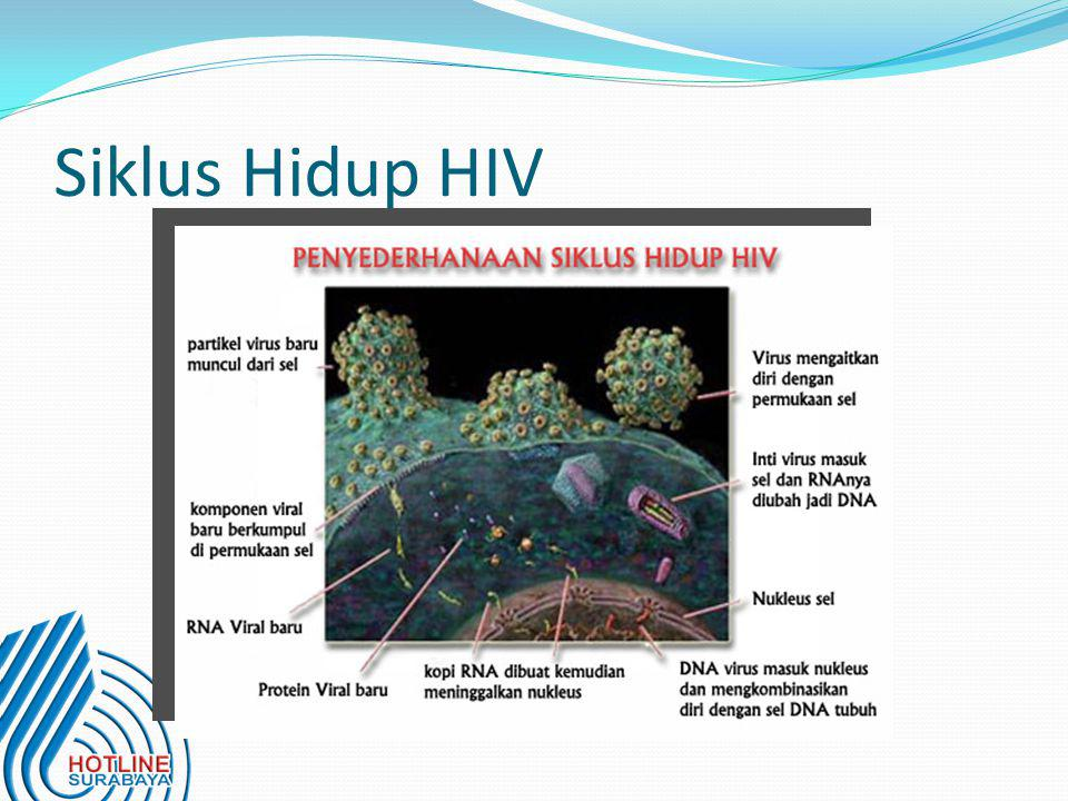 Siklus Hidup HIV