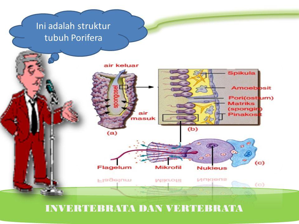Ciri-ciri Porifera Pencernaan intraseluler Diploblastik Simetris radial Asimetrik Reproduksi : vegetatif (tunas,gemulae) dan generatif (Autofertilisas