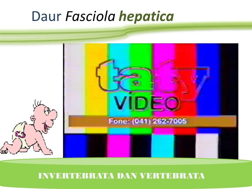 Trematoda daur hidup (Fasciola Hepatica) dan Cestoda (Taenia Sagita) INVERTEBRATA DAN VERTEBRATA