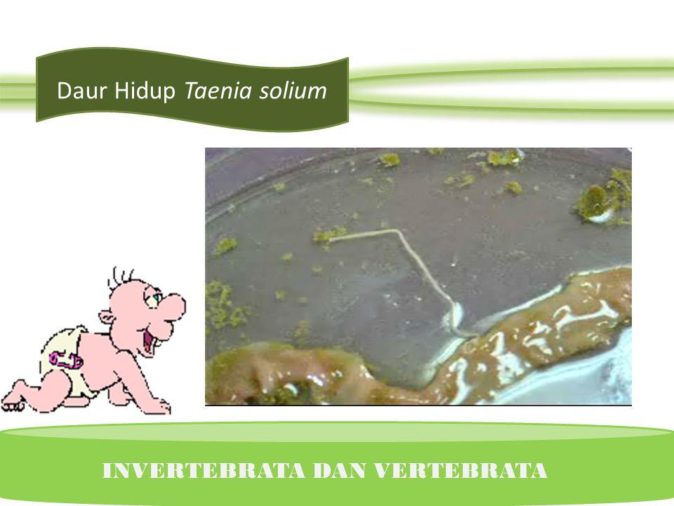 Daur Fasciola hepatica INVERTEBRATA DAN VERTEBRATA