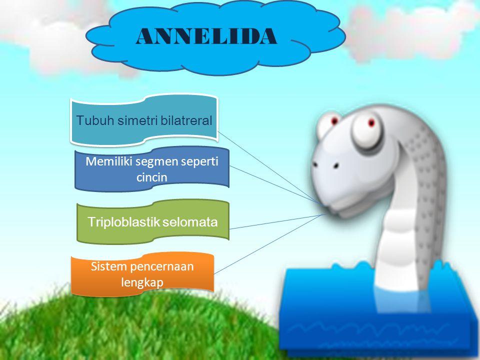 Daur Hidup Cacing Tambang (Ancylostoma duodenale & Necator americanus) INVERTEBRATA DAN VERTEBRATA