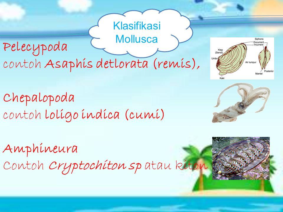 1.Polichaeta (Cacing berambut banyak) Cacing palolo (Eunice sp) 2. Oligochaeta (Cacing berambut sedikit) Cacing tanah (Lumbriscus terestris) 3.Hirudin