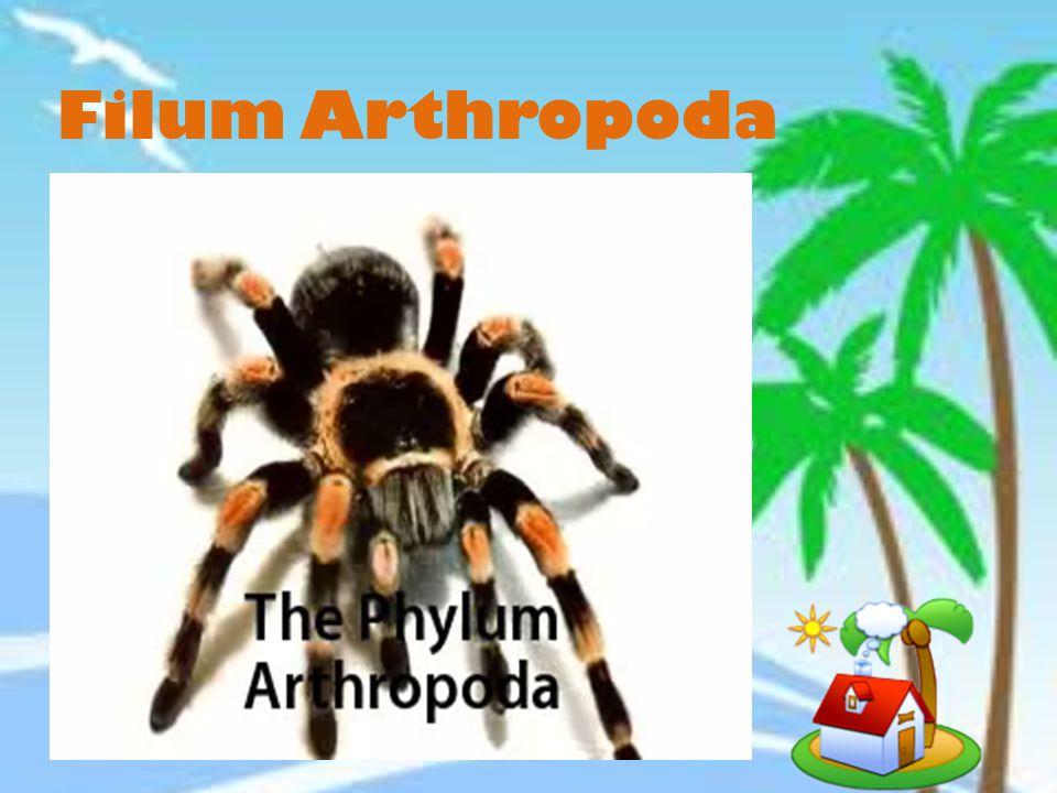 Mau tau macam-macam arthropoda? Kita nonton filmnya yuk!! klik