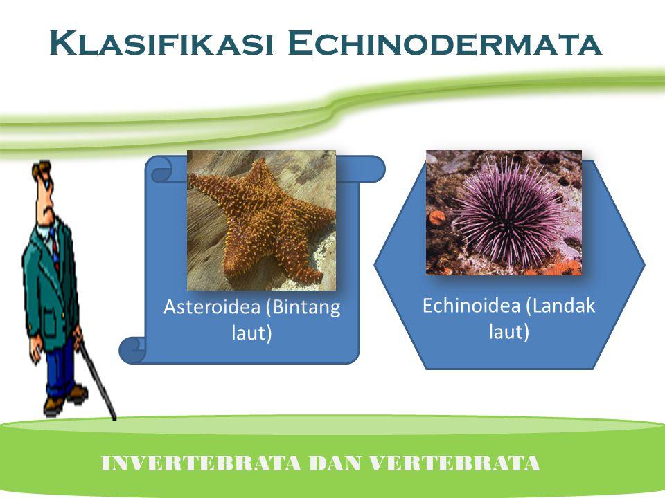 Echinodermata • UKURAN DAN BENTUK Terdiri dari bagian ORAL (yang memiliki mulut) dan ABORAL (tidak memiliki mulut) CARA HIDUP Makannya bergantung pada