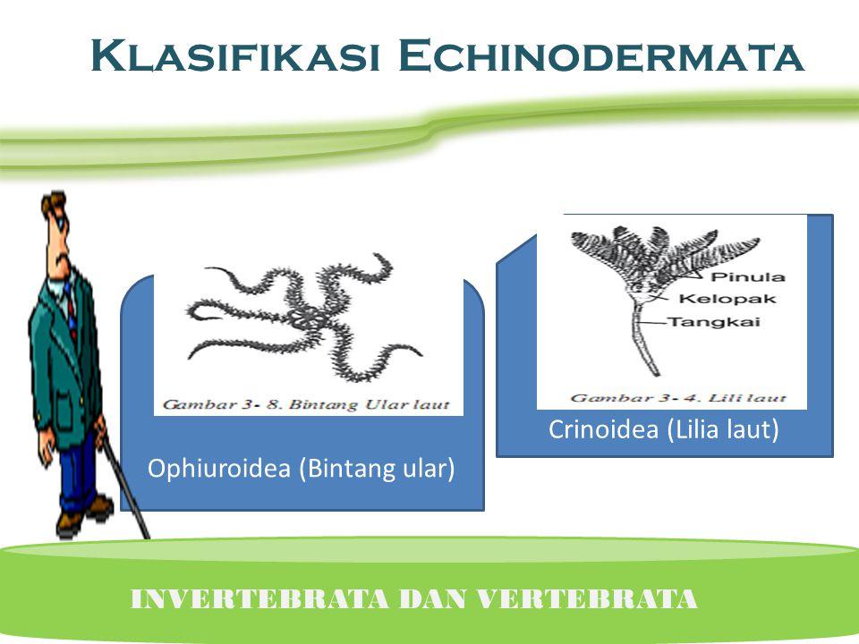 INVERTEBRATA DAN VERTEBRATA Klasifikasi Echinodermata Asteroidea (Bintang laut) Echinoidea (Landak laut)