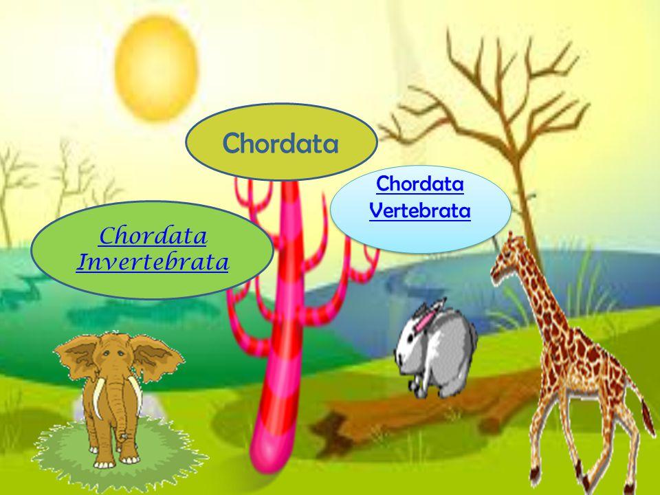 3 hal yg membedakan filum ckordata dengan yg lain : Notochord, tali saraf, dan katung insang faring